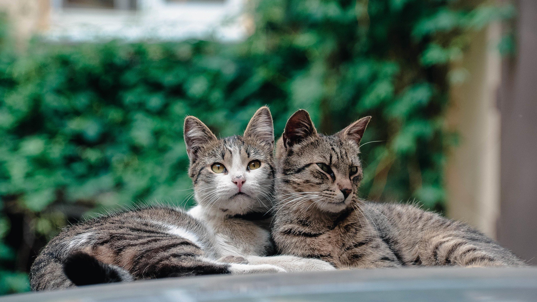 картинки кошек парами коляска трость, отличном