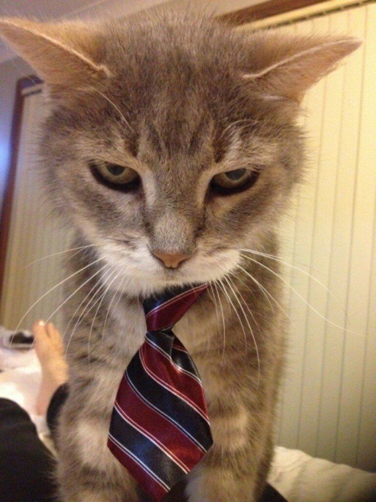 Картинки по работе смешные с котиками