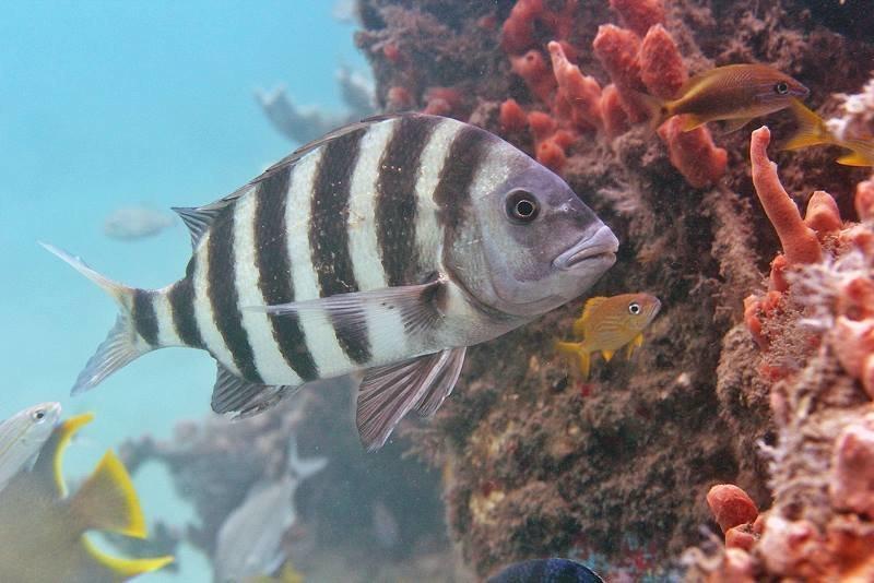 Как же называется эта рыба?    в мире, зубы, природа, рыба