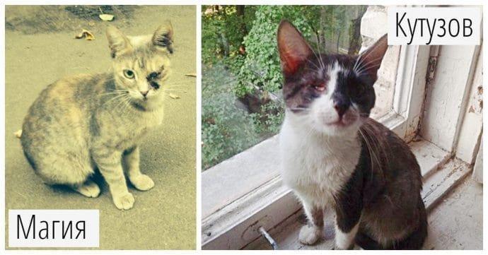 «Прощайся с кошками! До усыпления — 2 дня…» Кутузов и Магия: история с чудесами история, кошки, спасение
