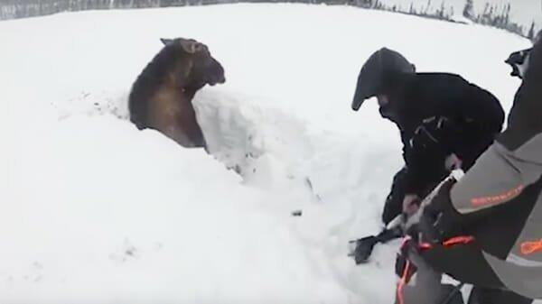 Ребята катались на снегоходах, внезапно они увидели что-то в снегу история, лось, спасение