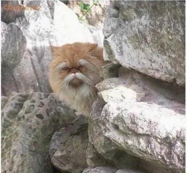 17. Этот кот выглядит так, будто пытается продать мне контрабандное лекарство от диабета подборка приколов, смешные животные, смешные картинки с надписями, юмор