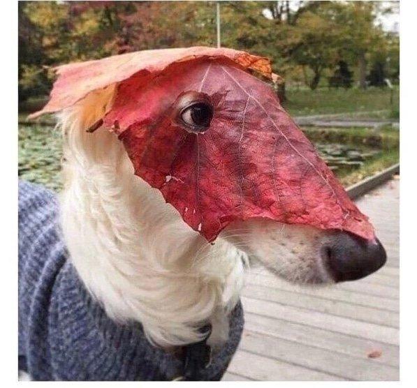 14. Никто не обращал на меня внимания, пока я не надел маску подборка приколов, смешные животные, смешные картинки с надписями, юмор