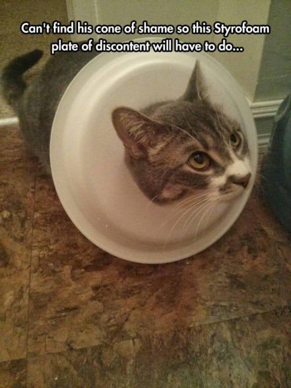 12. Когда не нашел воротник для кота, но решил, что и пластиковая тарелка справится с задачей подборка приколов, смешные животные, смешные картинки с надписями, юмор