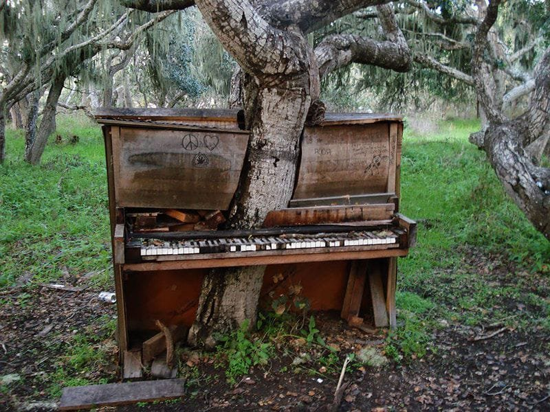 9. А это эксперимент: в лесу оставили пианино, через время в нем проросло дерево деревья-захватчики, интересно, природа, природа берет верх, фото