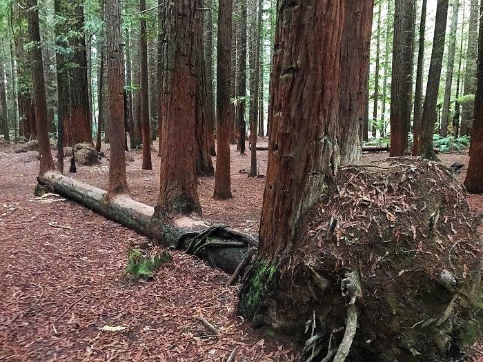13. Тот момент, когда деревья растут на деревьях деревья-захватчики, интересно, природа, природа берет верх, фото