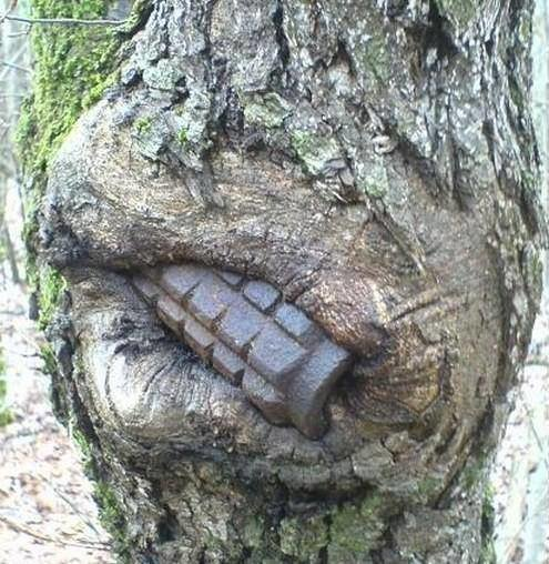 8. Природа прячет следы войны деревья-захватчики, интересно, природа, природа берет верх, фото