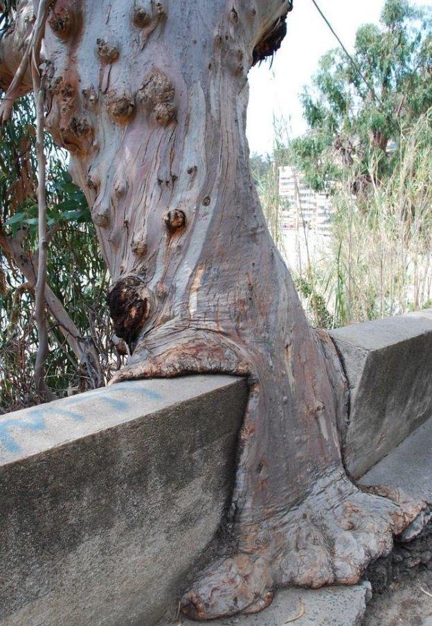 5. Природа не боится тягаться с теми, кто даже визуально выглядит непоколебимо деревья-захватчики, интересно, природа, природа берет верх, фото