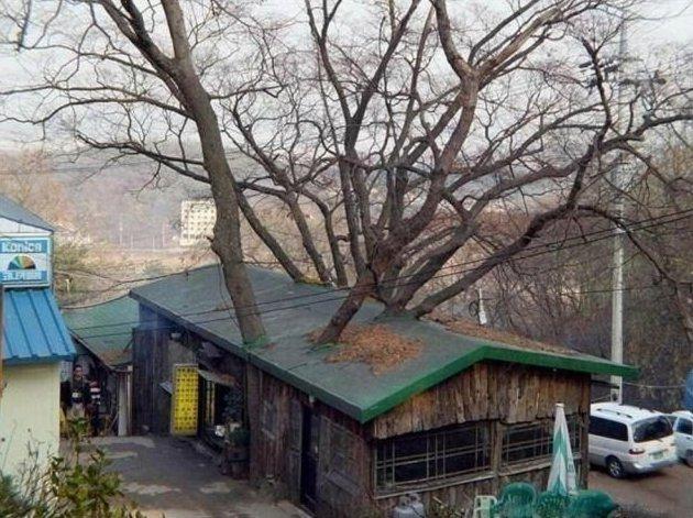 12. деревья-захватчики, интересно, природа, природа берет верх, фото