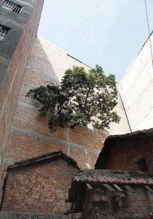 Природа, пожирающая все вокруг деревья-захватчики, интересно, природа, природа берет верх, фото