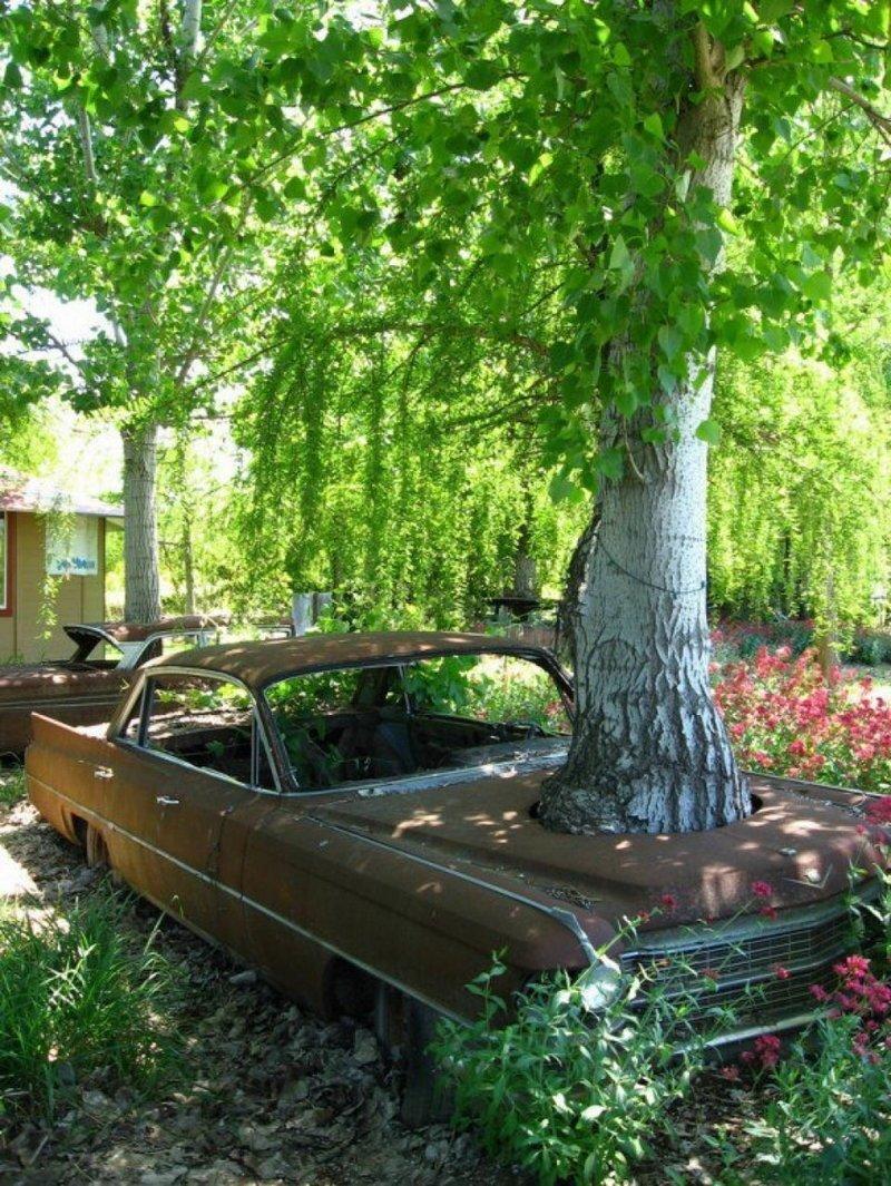 1. Излюбленные фокусы природы - расти там, где нет возможности расти деревья-захватчики, интересно, природа, природа берет верх, фото
