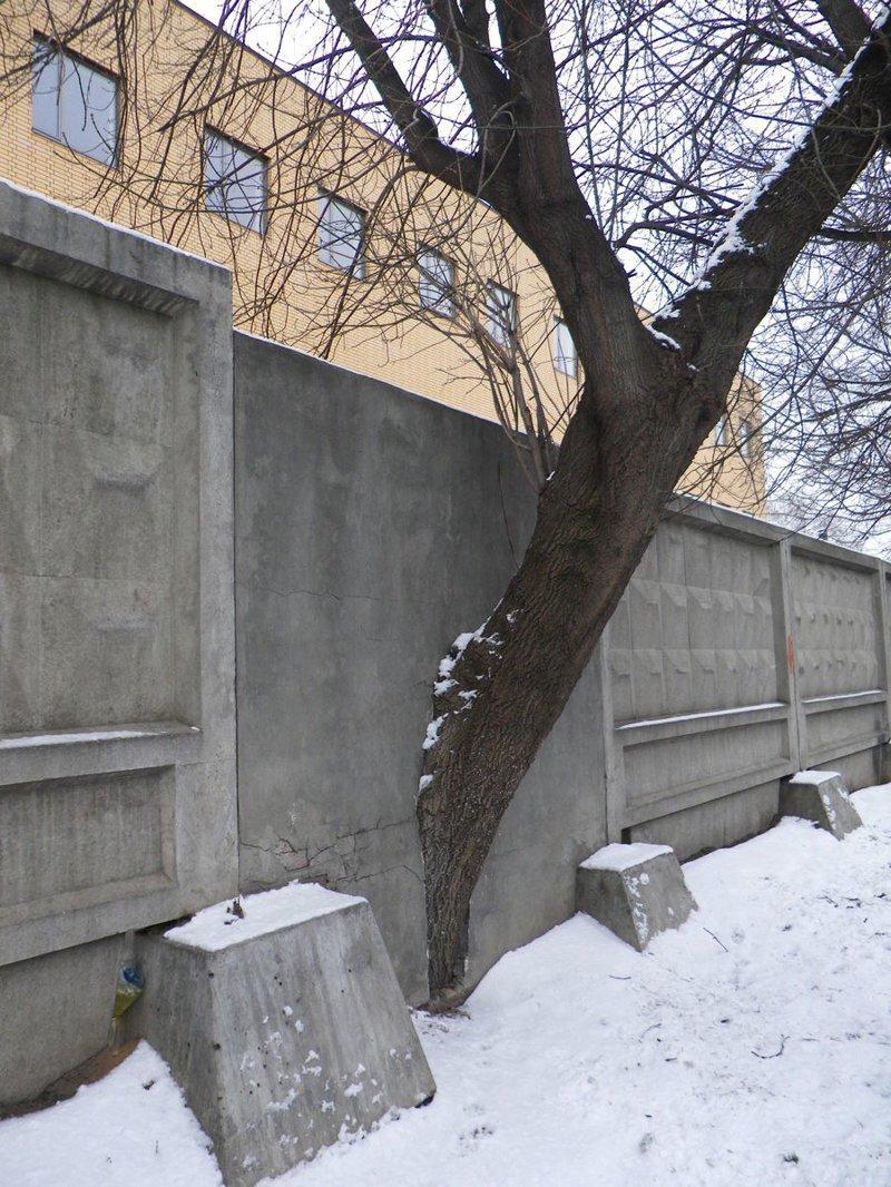 10. Заборы - это не помеха деревья-захватчики, интересно, природа, природа берет верх, фото