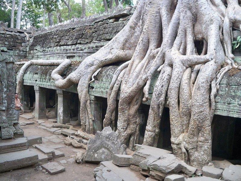 11. В Камбодже на руинах храма деревья-захватчики, интересно, природа, природа берет верх, фото