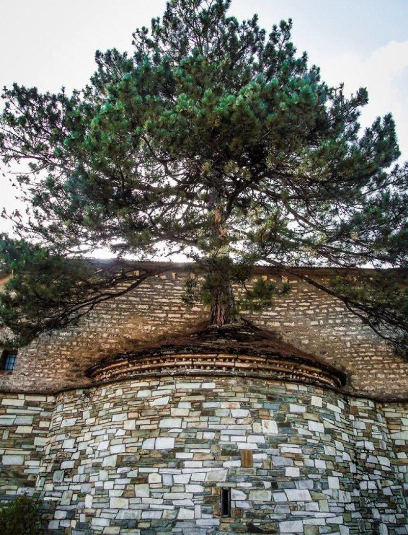 14. В Греции 100-летнее дерево проросло сквозь крышу церкви деревья-захватчики, интересно, природа, природа берет верх, фото