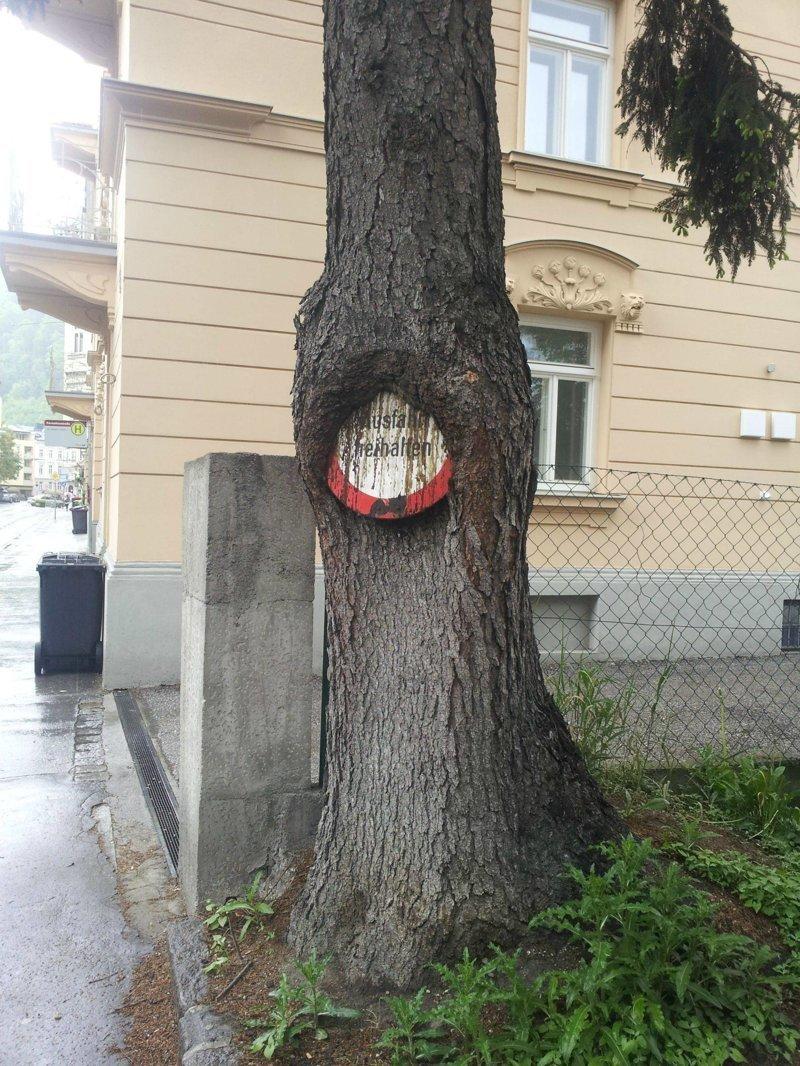4. деревья-захватчики, интересно, природа, природа берет верх, фото