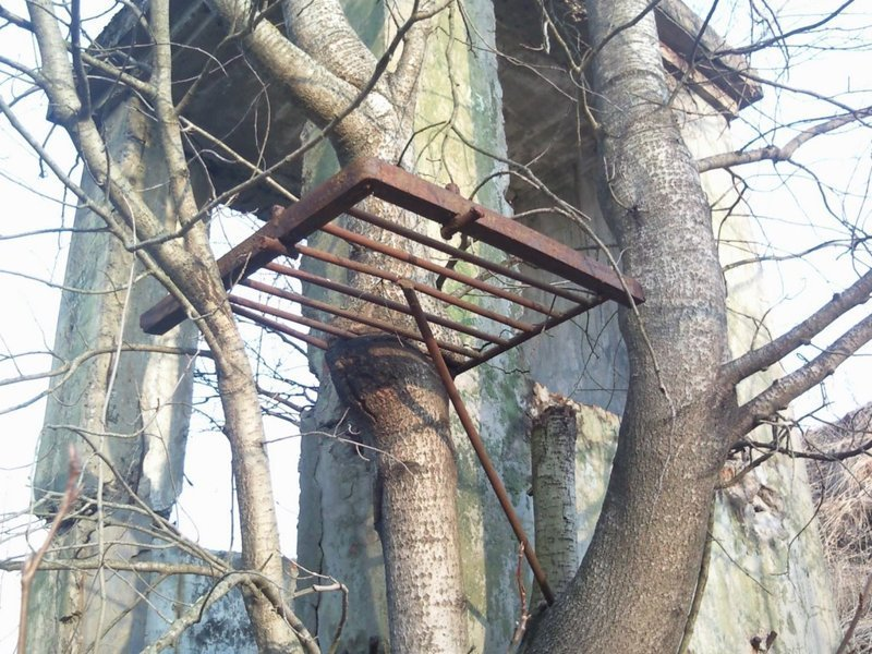15. В заброшенных бункерах полно таких примеров деревья-захватчики, интересно, природа, природа берет верх, фото