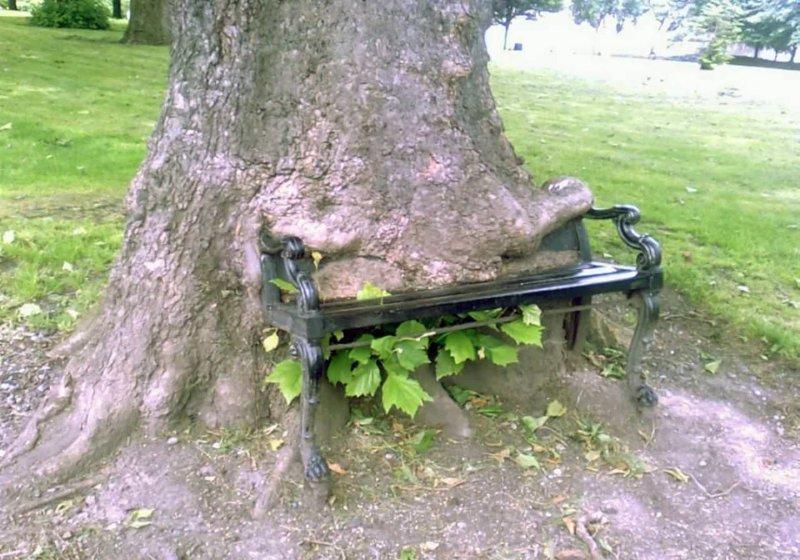 2. Поглощать то, что мешает деревья-захватчики, интересно, природа, природа берет верх, фото