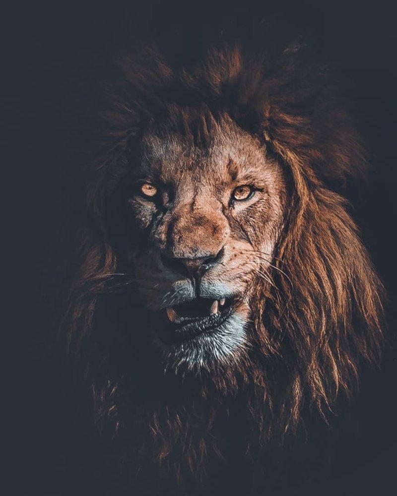 25 художественных фотографий зверей, на которых они выглядят максимально харизматично дикая природа, дикие животные, животные, искусство, фотография