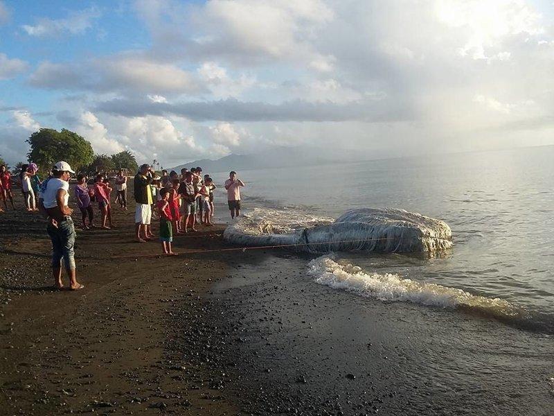 На филиппинский пляж океан выбросил загадочное волосатое существо в мире, люди, море, океан, пляж, существо, факты