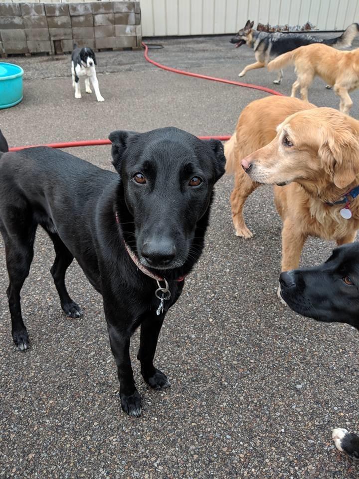 Идеальный снимок: 30 псов приняли участие в коллективном селфи в американском питомнике животные, кадр, милота, питомник, селфи, снимок, собака