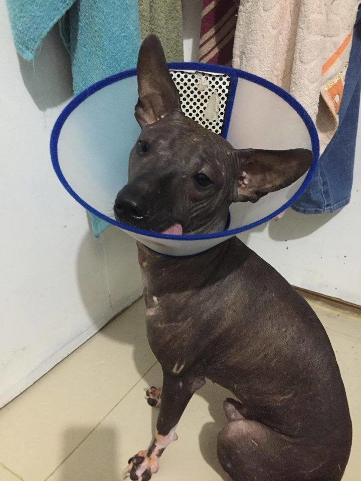 Facebook заблокировал милое фото щенка, приняв его за порнографию милота, показалось, прикол, собака, фейсбук, щенок