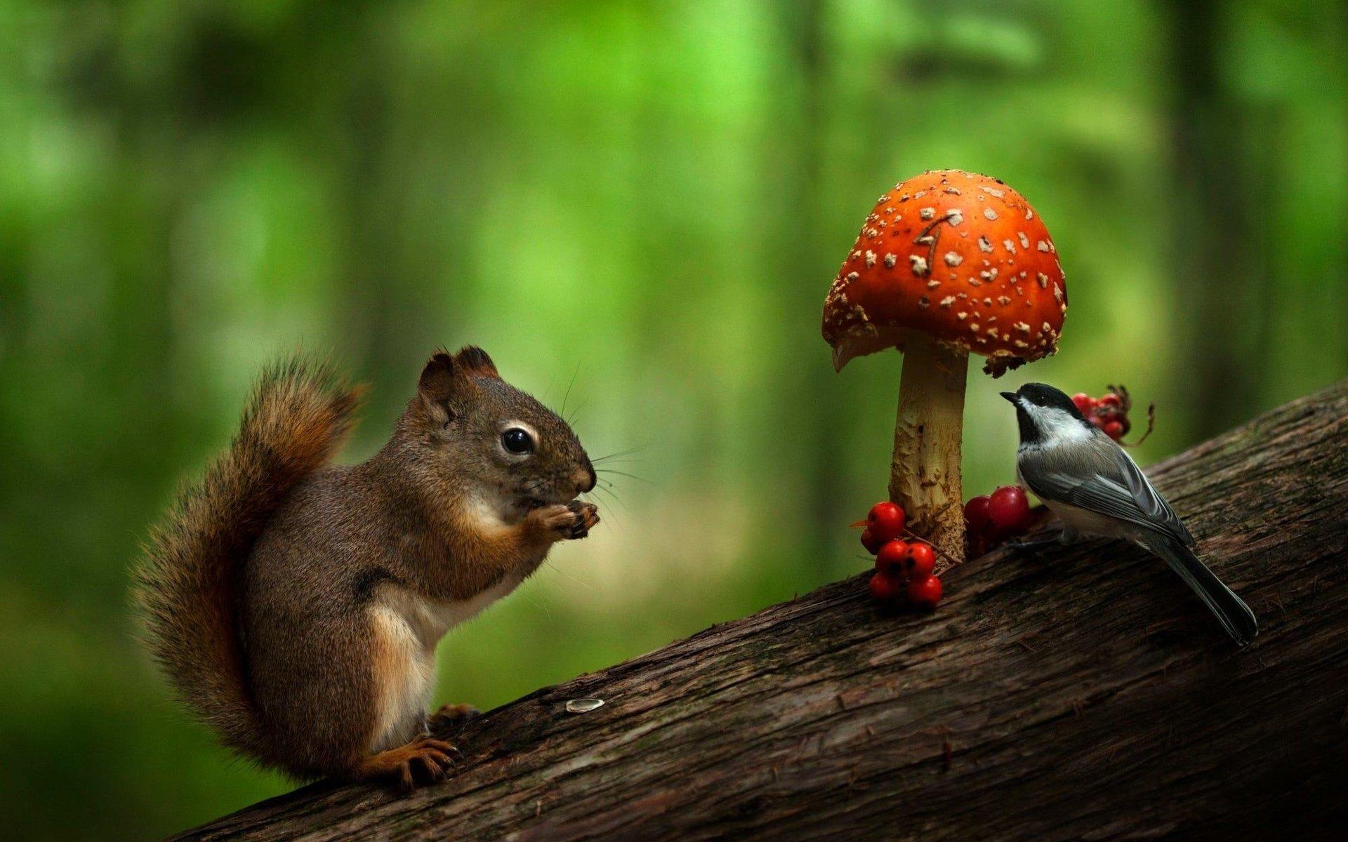 представленье твоём белка и грибы фото полка прикроватная тумбочками