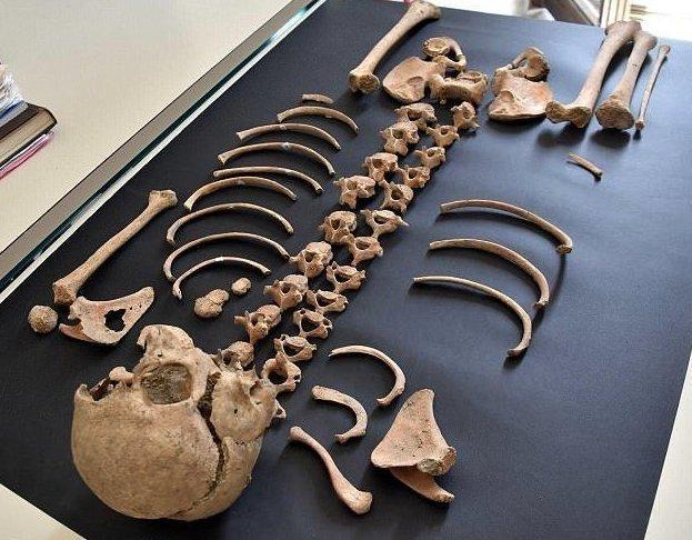 В Италии нашли кобылу - ровесницу Христа археологи, археология, древние артефакты, история, наука, помпеи, раскопки, ученые