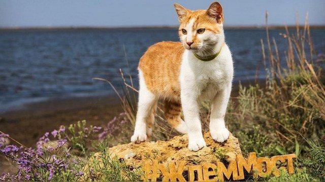 Вскоре фотографии кота стали появляться в интернете.Он становился все более популярным. Крымский мост, Талисман моста, кот Мостик, крым, россия