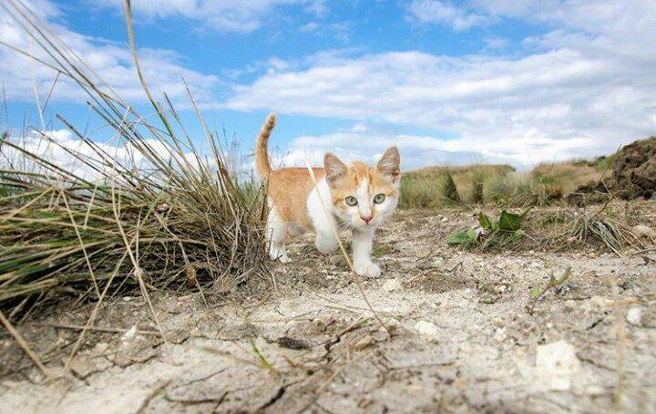 Откуда появился на стройке века котенок доподлинно не известно.Совсем маленьким и тощим котенком его подобрали строители моста ещё в апреле 2015 года. Крымский мост, Талисман моста, кот Мостик, крым, россия