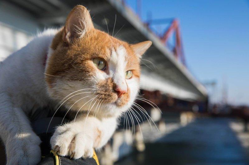 Кот Мостик - талисман Крымского моста Крымский мост, Талисман моста, кот Мостик, крым, россия
