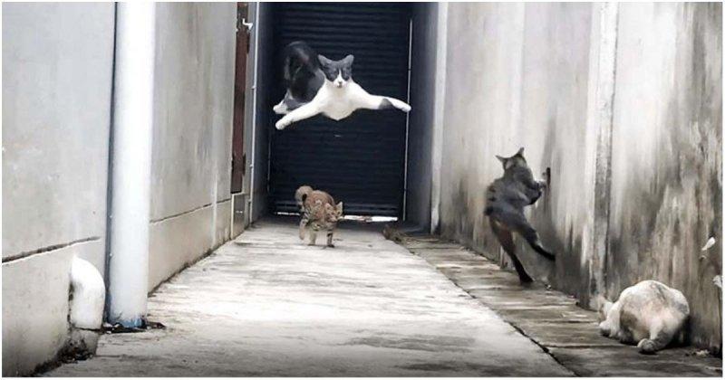 Ловкая кошка виртуозно ушла от своих обидчиков видео, животные, коты, паркур, прикол, юмор
