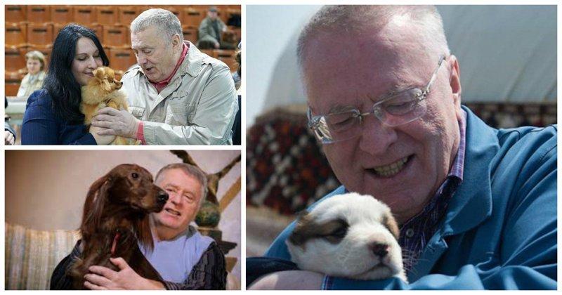 Жириновский пообещал исключить из ЛДПР всех собаковладельцев ynews, жириновский, закон, запрет, собаки