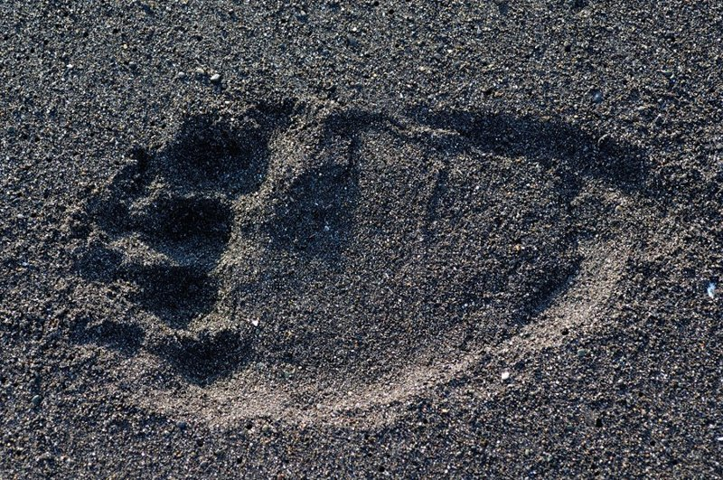 Отпечаток задней лапы на вулканическом песке: животные, звери, медведь, природа