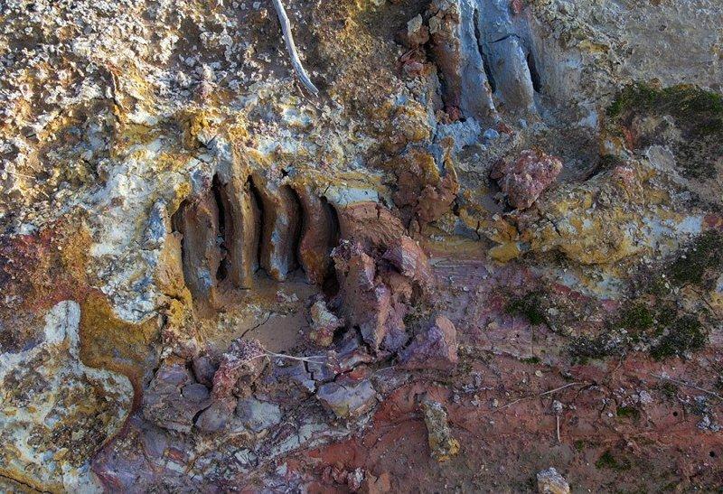 Зверь шел по крутому и сырому склону, с силой вдавливая когти в глину. Цвета вулканической глины похожи на палитру художника… животные, звери, медведь, природа