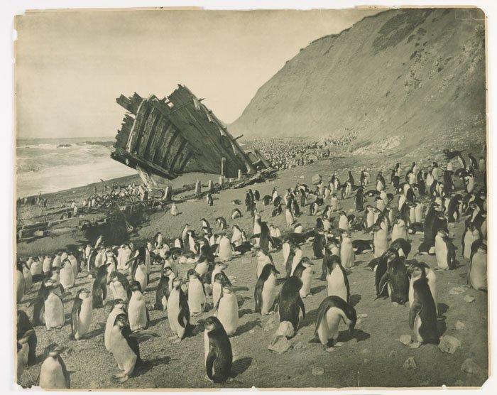 """Обломки судна """"Грейтитьюд"""" на острове Маккуори Дуглас Моусон, австралия, антарктида, изучение Антарктики, научная экспедиция, полярные исследователи, поход во льдах, фотосвидетельства"""