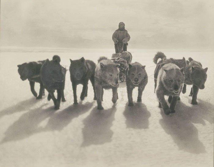 Хаски тянут сани Дуглас Моусон, австралия, антарктида, изучение Антарктики, научная экспедиция, полярные исследователи, поход во льдах, фотосвидетельства