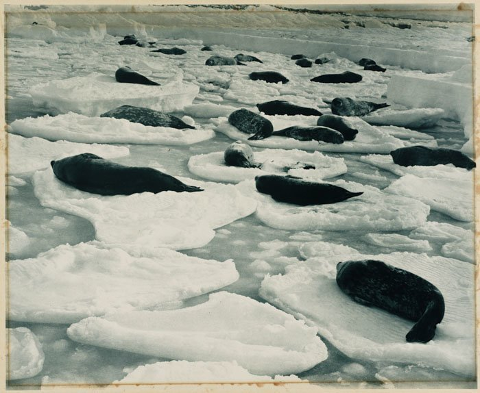 Дневной сон на тюленьем острове Дуглас Моусон, австралия, антарктида, изучение Антарктики, научная экспедиция, полярные исследователи, поход во льдах, фотосвидетельства