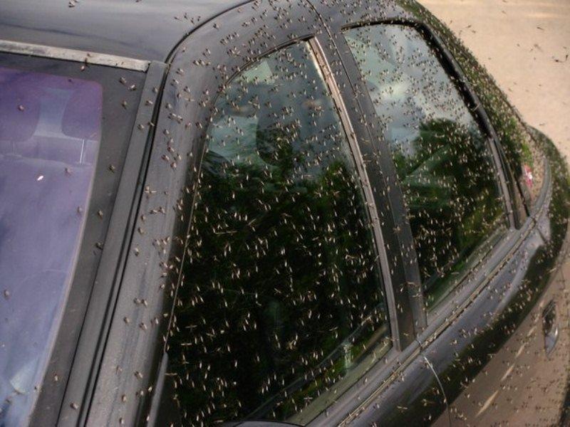 В Воронежской области огромное количество комаров атакуют животных и людей в мире, комары, люди, насекомые, нашествие