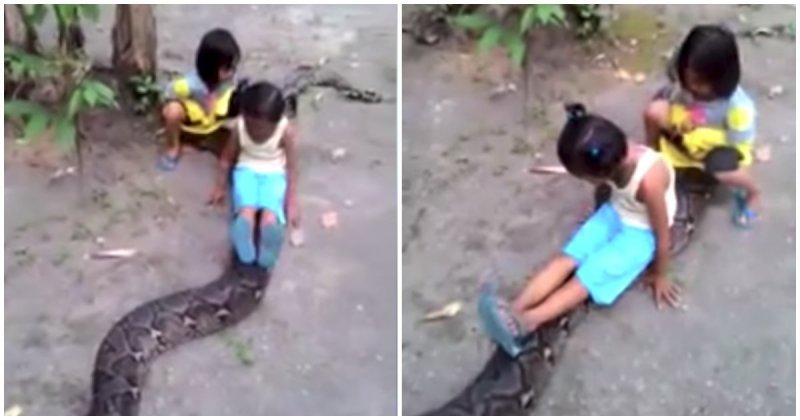 Маленькие девочки прокатились на  большом сетчатом питоне в мире, видео, дети, змея, индонезия, шок