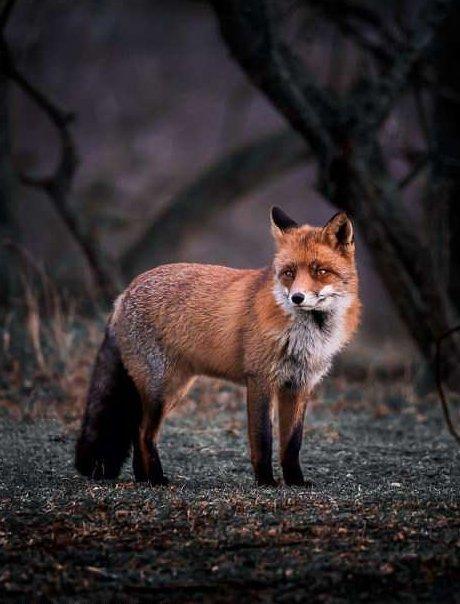 Финский фотограф рассказал, как ему удалось завоевать доверие лисиц животные, лисы, природа, удивительное, финляндия, фотограф, фотография, фоторепортаж