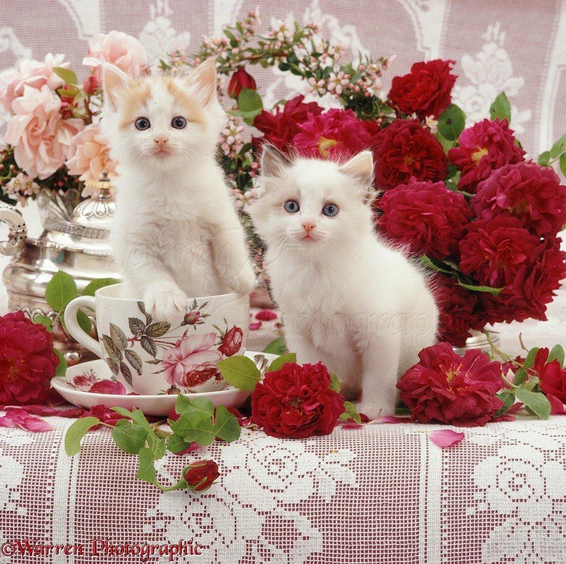 Открытки или фото с кошками, любимому