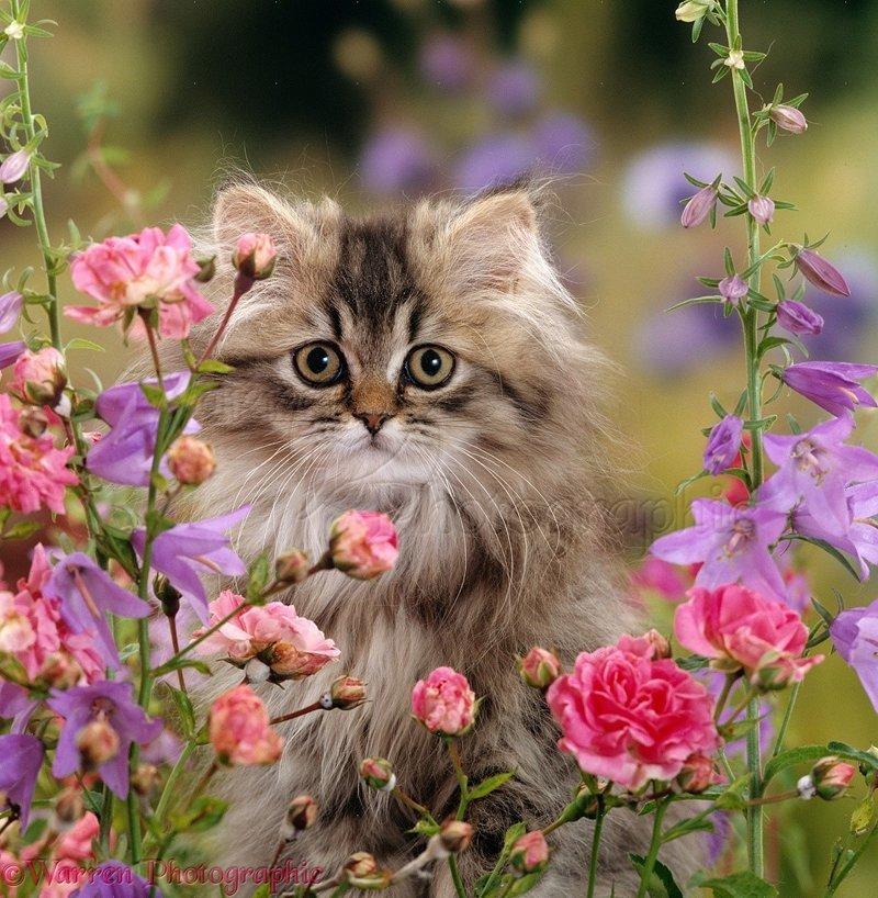 Картинки котят с цветочками