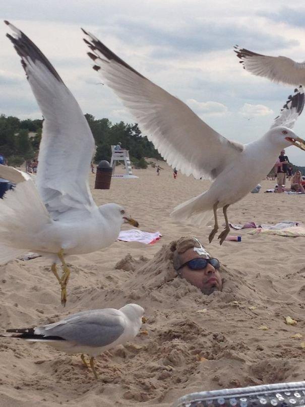"""""""Закопал друга в песке, и кинул на него чипсы. Подоспели чайки"""" забавно, не повезло, неудачи, плохой день, подборка, провал, фейлы, фото"""