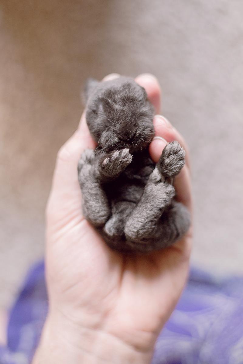 Малыш-кролик день, животные, кадр, люди, мир, снимок, фото, фотоподборка