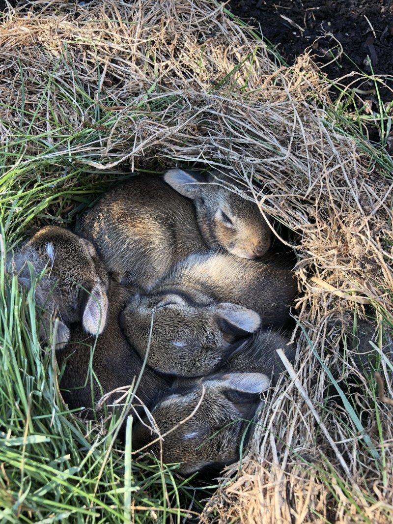 Семья кроликов день, животные, кадр, люди, мир, снимок, фото, фотоподборка