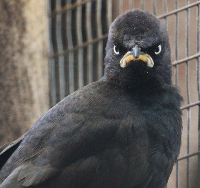 Недовольная птичка день, животные, кадр, люди, мир, снимок, фото, фотоподборка