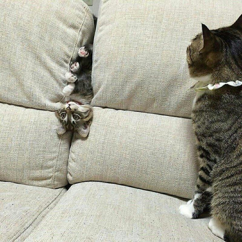 20 доказательств того, что у котов действительно девять жизней животные, кот, коты, подборка, приколы с животными, смешно, фото, юмор