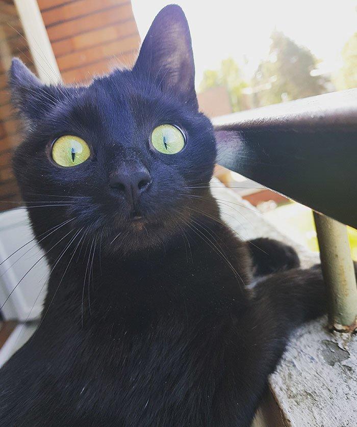 """""""Человек, ты это видел?"""" балкон, впечатления, животные, кот, нука, улица, фото, эмоция"""