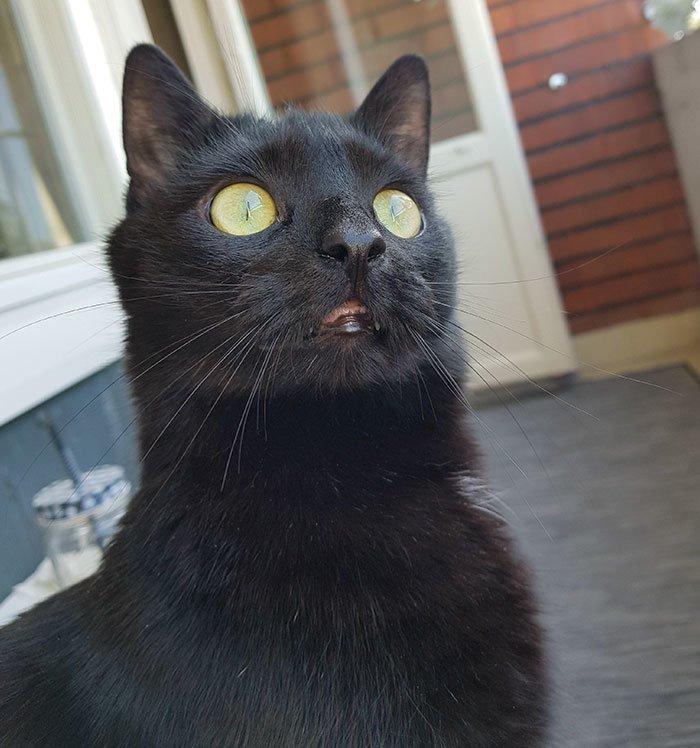 """""""Он боится буквально всего"""" балкон, впечатления, животные, кот, нука, улица, фото, эмоция"""