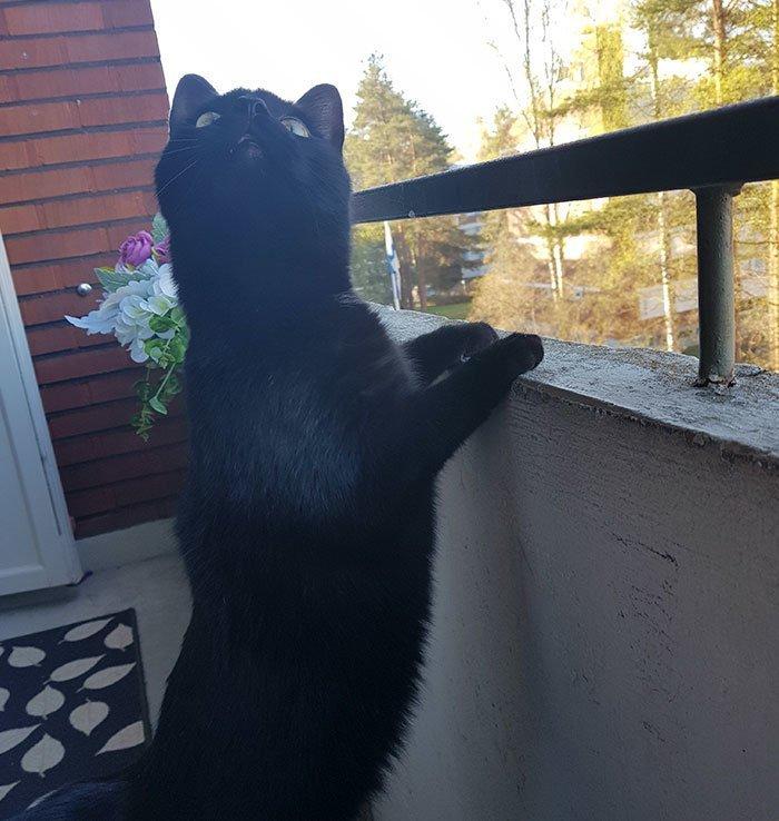 Он с любопытством наблюдал за птицами балкон, впечатления, животные, кот, нука, улица, фото, эмоция